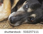 closeup of a dog looking at... | Shutterstock . vector #533257111