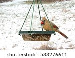female northern cardinal ... | Shutterstock . vector #533276611