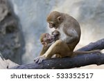 image of mother monkey and baby ...   Shutterstock . vector #533352517