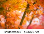 soft  de focused autumn leaves...   Shutterstock . vector #533393725