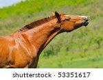 portrait of sorrel horse  on...   Shutterstock . vector #53351617
