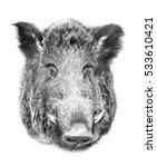 boar on white background.... | Shutterstock . vector #533610421