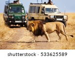 big lion crossing the road at... | Shutterstock . vector #533625589