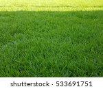 texture of green grass field... | Shutterstock . vector #533691751