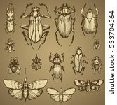 Insect Beetles And Moth Sketch...