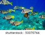 Underwater Image Of Tropical...