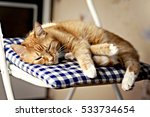 Stock photo red cat is sleeping on a blue pillow on a chair in the sunshine 533734654