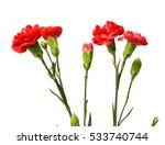 red carnation bunch   Shutterstock . vector #533740744