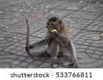 Monkey Eating Delicious Fruit.
