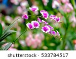 beautiful orchid flower in the... | Shutterstock . vector #533784517