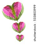 Small photo of heart from leaves of Coleus on a white background