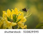 Photo Of A Bumblebee Collects...
