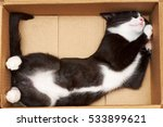 Stock photo funny cat fills the volume of the box the tip of the tail at degrees 533899621