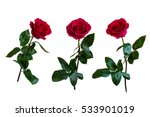Red Roses. Isolated  White...
