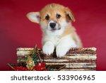 Welsh Corgi Pembroke Puppy  Si...