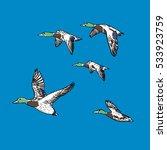 hunting duck vector illustration