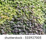 Small photo of Quickset of leaves