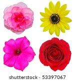 summer flower heads | Shutterstock . vector #53397067