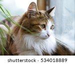Portrait Of Cat Close Up...