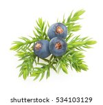 juniper berries isolated | Shutterstock . vector #534103129