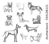 a collection of sketches breed ... | Shutterstock .eps vector #534138121