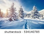 majestic white spruces glowing... | Shutterstock . vector #534140785