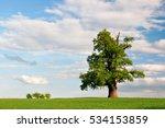 Mighty Oak Tree In Green Field...
