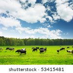 Herd Of Cows On Green Meadow...