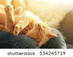 Stock photo cute cat lying on its owner s knees close up view 534245719