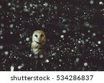 Stock photo barn owl winter portrait with dark and snow background soft focus on owl head retouched picture 534286837