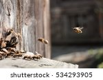 Bee Flying To Hive. The Bees...