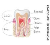 tooth structure with... | Shutterstock . vector #534303985