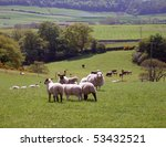 Flock Of Sheep Grazing In Rura...
