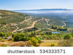 Landscape With Olive Fields...