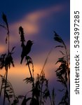 Small photo of sunset and bird sunset sky background Great Reed Warbler / Acrocephalus arundinaceus