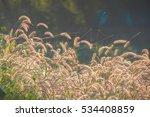 grassland | Shutterstock . vector #534408859