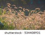 grassland | Shutterstock . vector #534408931