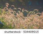 grassland | Shutterstock . vector #534409015