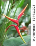 Upright Peduncle Of Red...