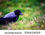 a crow in the nature | Shutterstock . vector #534419059