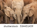 A Herd Of Elephants At A...