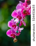 Small photo of Orchid, Vanda, beautiful orchids. In the garden, yard, the band designee, Chiang Mai, Thailand. Country of Thailand.