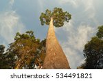looking up at a tall tree.... | Shutterstock . vector #534491821