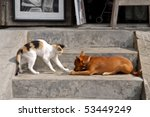 Stock photo cat and dog are playing 53449249