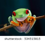 Small photo of The red-eyed tree frog. Frog with red eyes, wood. Beautiful green and blue colors. Exotic animal of rain forest. agalychnis