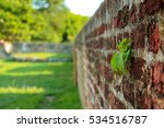 Small photo of Old fortified brick wall with plant growing on the wall. Obstinacy, power of nature, power of life concept. Fort Cornwallis. George Town. Penang, Malaysia.