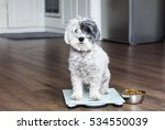 Stock photo animal health cute poodle dog on weigh scales 534550039