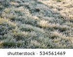 Frozen Grass From The Winter