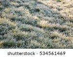 Frozen Grass From The Winter