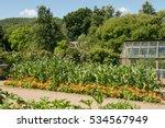 Home Grown Organic Sweet Corn...